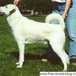 History of the Canaan Dog