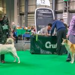 BOB and BOS Crufts 2019